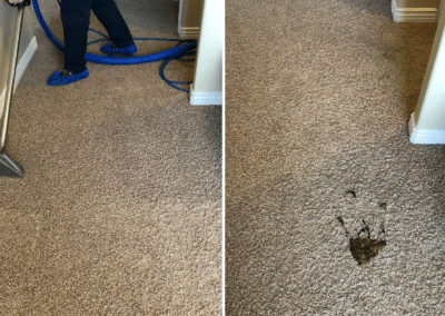 Best carpet cleaning solution for pets - TruRinse