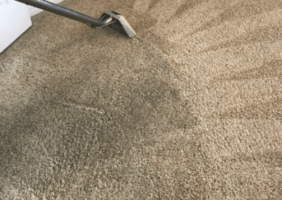 Professional carpet cleaning in progress - TruRinse Carpet Cleaning