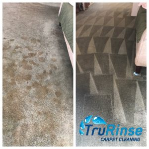 TruRinse cleaning up pet mess