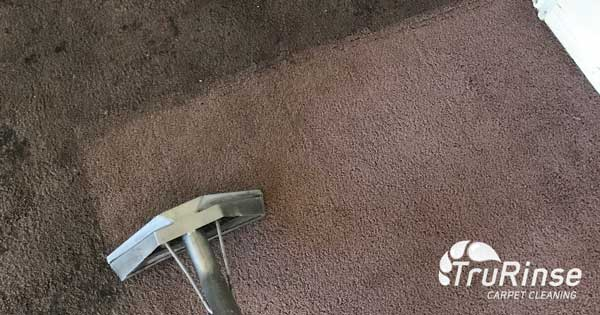 5 Reasons to Work with a Professional Carpet Cleaner